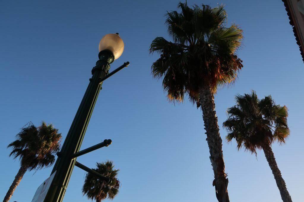 Palmen in San Diego