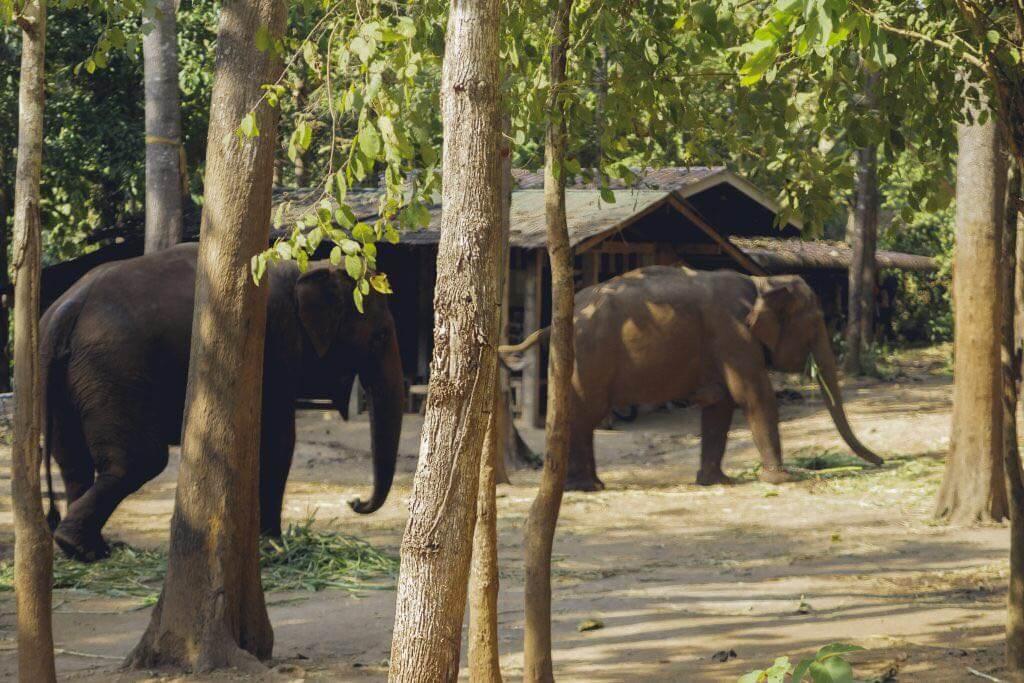 Elefanten Doi Inthanon