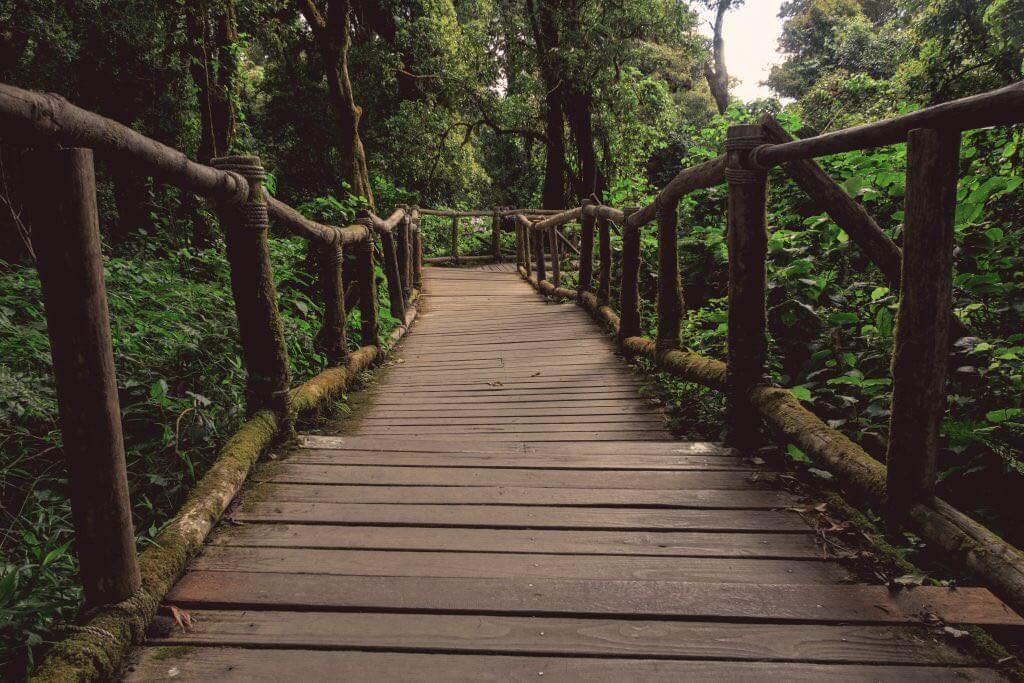 Holzweg zur Spitze Doi Inthanon